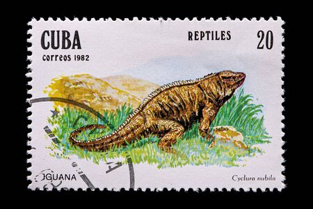 Novosibirsk, Russia - January 07, 2020: stamp nature collection printed in Cuba shows iguana on grass background , a postage stamp circa 1982
