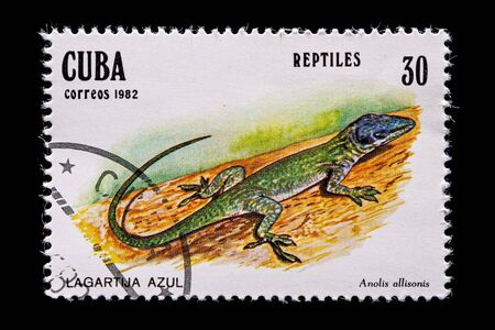 Novosibirsk, Russia - January 07, 2020: stamp nature collection printed in  Cuba  shows lagartija azul lizard on branch   on  green background ,  a postage stamp circa 1982