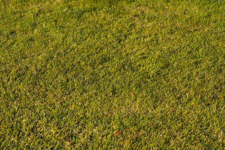 Texture of green grass field background
