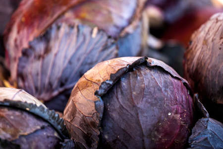 Close up of the purple cabbage, background. Fresh cabbage variety grown in the shop. Tasty and healthy food