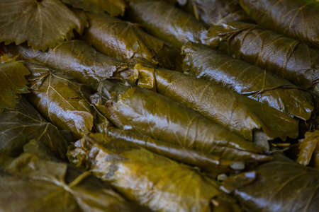 Close-up green vine leaves for background, leaf texture. Green grape leaves for making dolma