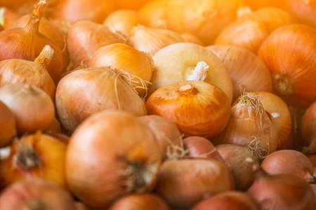 Brown onion background. Fresh onion variety grown in the shop. onion for salad, entree and soup Archivio Fotografico