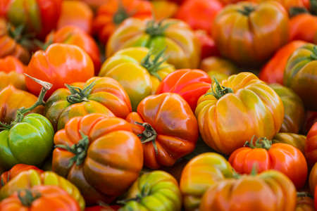 Tomatoes background. Fresh Tomatoes variety grown in the shop. Tomatoes for salad, entree and soup