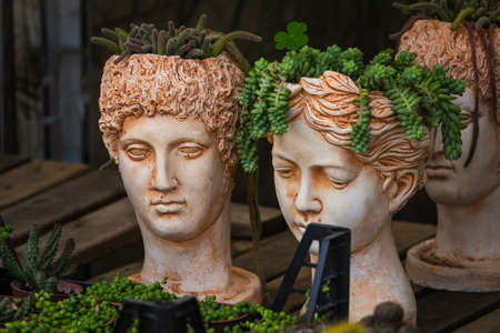 Green succulents in pots in the form of Greek heads in a shop window