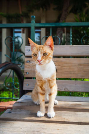 A tricolor cat with green eyes looks calmly and sitting on bench on the street on a warm summer day