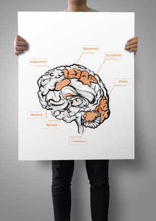sensations: man showing poster of hand drawn brain as medical concept  Stock Photo