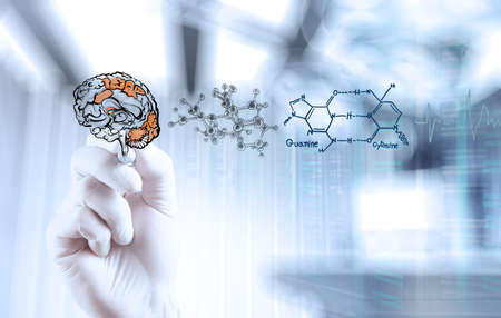 nerve: doctor neurologist hand drawing brain with computer interface as concept Stock Photo