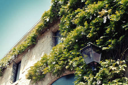 green building: Green wall on exterior of building and vintage lamp