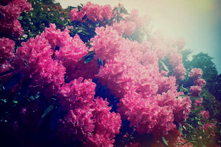 Spring Hydrangea flower vintage stlye photo