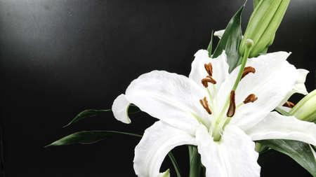 검은 색 바탕에 피는 백합 꽃