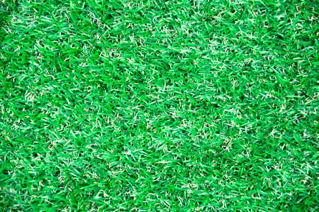 sward: Green Grass Background