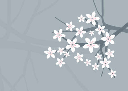 Vector Cherry Blossom Background
