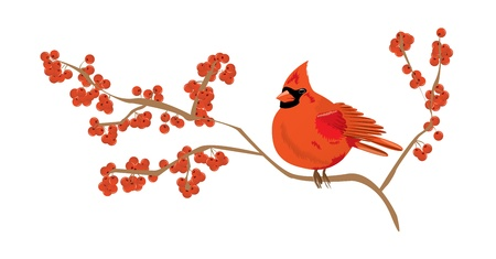 cardinal bird: Red cardinal on a branch of red currant Illustration