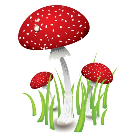 Three red fly amanita mushrooms Stock Vector - 18007878