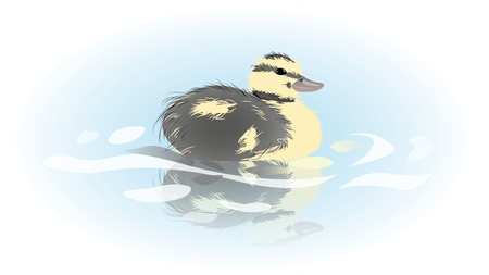 reflection of life: Youn duckling on a lake Illustration