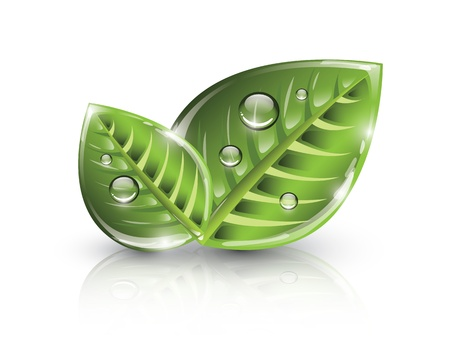 Green eco leaves