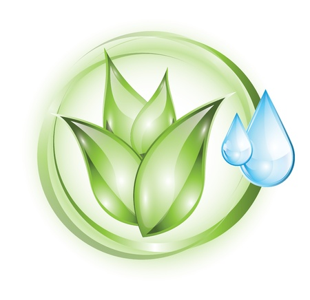 natural resource: Green plant with drops