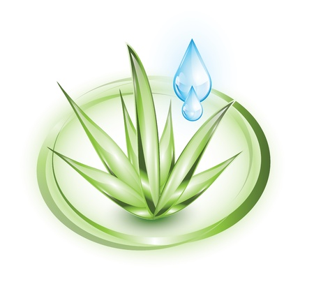 organic concept: Aloe vera with drop