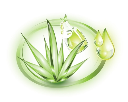 Aloe vera with extract Vector