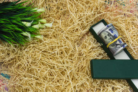 Dollar banknotes twisted and secured with a yellow money band lie on straw with green leaves and a green gift box, copy space, close up.