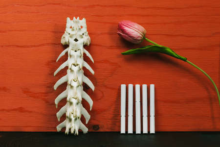 Close up cigarette and the skeleton of a dog's spine on red background with a flower, Quit Smoking, Stop Smoking Cigarette Concept.
