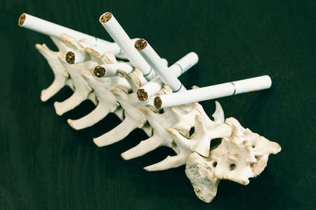 Quit Smoking. Close up cigarette on the skeleton of a dog's spine. Stop Smoking Cigarette Concept. Stok Fotoğraf