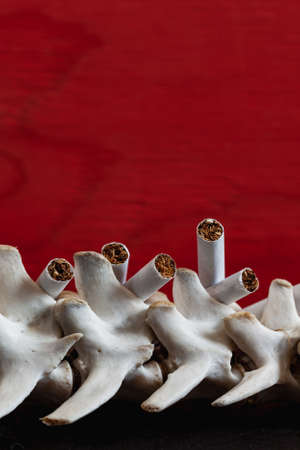 Close up cigarette and the skeleton of a dog's spine on red background, Quit Smoking, Stop Smoking Cigarette Concept.