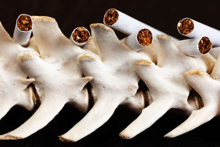 Close up cigarette and the skeleton of a dog's spine, Quit Smoking, Stop Smoking Cigarette Concept. Stok Fotoğraf