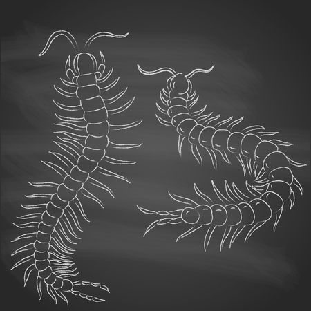 centipede: hand-drawn with  chalk centipede cartoon, insect icon.  painted on black background. vector illustration.