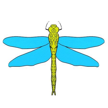Schild Bug. Palomena Prasina. Skizze Des Schildprogrammfehler ...