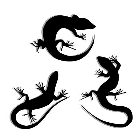 lagartija: Conjunto de hermoso lagarto blanco y negro, siluetas lagarto. Siluetas Salamandra. Gecko siluetas. Ilustración vectorial
