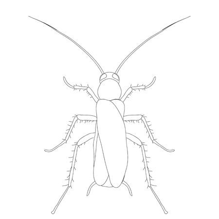 Anatomía De Insectos. Etiqueta Engomada De La Luciérnaga Escarabajo ...
