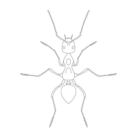 formica: Formica exsecta. Sketch of ant. Ant isolated on white background. Ant Design for coloring book.  hand-drawn ant. Vector illustration