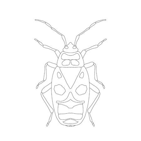firebug: Pyrrhocoris apterus. beetle. Bug-soldier. Firebug. Sketch of beetle. Firebug isolated on white background. beetle Design for coloring book.  hand-drawn beetle. Vector illustration