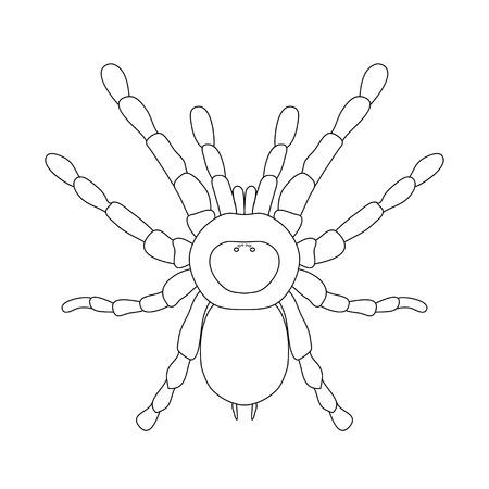 Anatomía De Insectos. Tarántula. Brachypelma Smithi, Mujer Araña ...