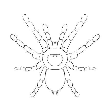 predatory insect: tarantula spider Brachypelma smithi, spider female. spider top view. Sketch of spider. tarantula isolated on white background. tarantula Design for coloring book.  hand-drawn tarantula. Vector illustration