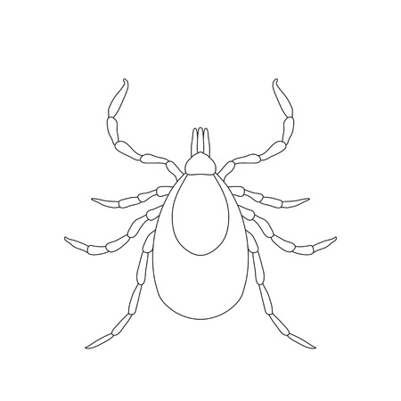 acarid: Tick parasite. Sketch of Tick. Mite. Tick isolated on white background. Tick Design for coloring book.  hand-drawn Tick. Vector illustration