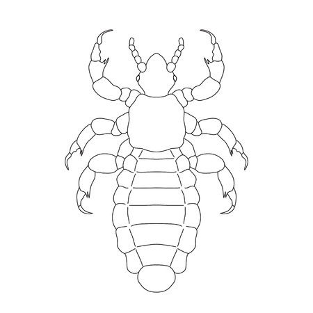 A head  human louse. Pediculus humanus capitis. Sketch of louse.  louse isolated on white background. louse Design for coloring book.  hand-drawn louse. Vector illustration