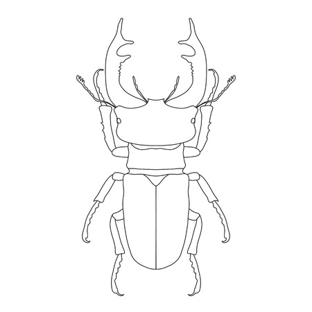 Insect Anatomy. Sticker Stag-beetle. Lucanus Cervus. Sketch Of ...