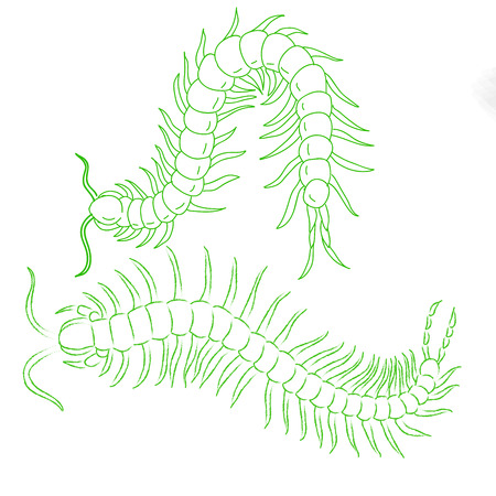 food poison: hand-drawn centipede cartoon, insect icon.  isolated on white background. vector illustration. Illustration