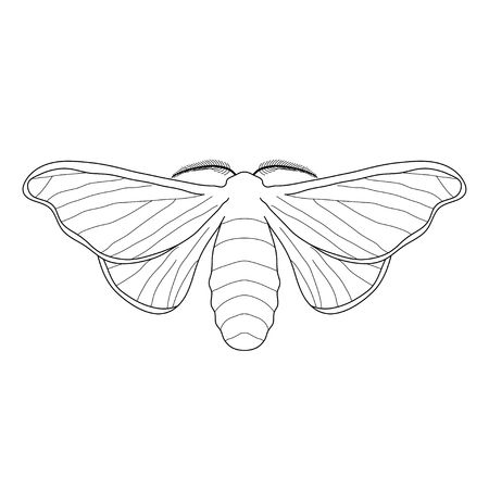 mori: butterfly Bombyx mori.  Sketch of butterfly. butterfly isolated on white background. butterfly Design for coloring book.  hand-drawn butterfly. Vector illustration