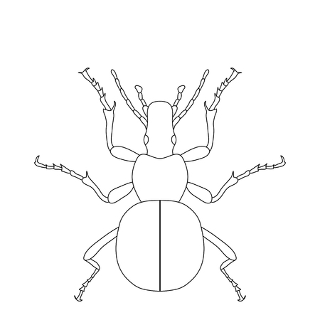 geotrupidae: ground beetle bug. Carabidae. Sketch of ground beetle.  ground beetle isolated on white background. ground beetle Design for coloring book.  hand-drawn ground beetle. Vector illustration