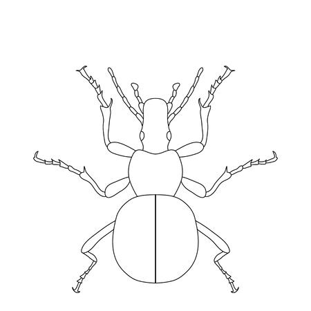 Insect Anatomy. Sticker Ground Beetle Bug. Carabidae Coleoptera ...