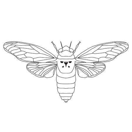 synchronized: cicada. Cicadidae. Sketch of cicada. cicada isolated on white background. cicada Design for coloring book.  hand-drawn cicada. Vector illustration Illustration