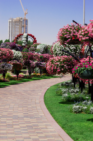 DUBAI, UAE - APRIL 23,2015. Park alley with many flowers . Dubai Miracle Garden in the UAE. United Arab Emirates