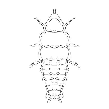 Trilobite beetle Duliticola Platerodrilus. Sketch of  Trilobite beetle.  Trilobite beetle isolated on white background.  Trilobite beetle Design for coloring book.  hand-drawn  Trilobite beetle.  Vector illustration
