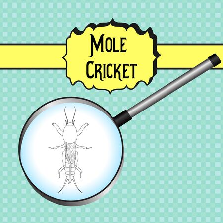 cricket: Gryllotalpidae.  European mole cricket. gryllotalpa. Sketch of mole cricket  mole cricket in magnifier. mole cricket Design for coloring book.  hand-drawn outline mole cricket. Vector illustration Illustration