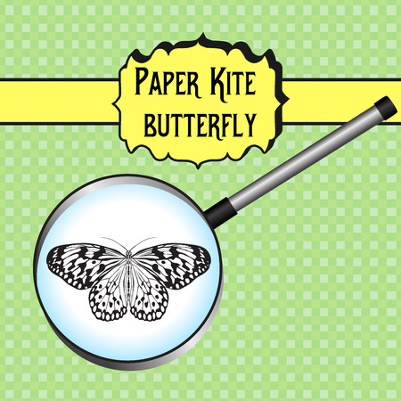 paper kite: Butterfly Idea Leuconoe. Paper Kite . Sketch of Butterfly. Butterfly in magnifier. Butterfly Design for coloring book. hand-drawn Butterfly. Hand drawn Vector illustration