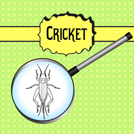 campestris: insect in magnifier.. cricket. grig. Gryllus campestris. Sketch of cricket. cricket Design for coloring book.  hand-drawn cricket. Vector illustration Illustration