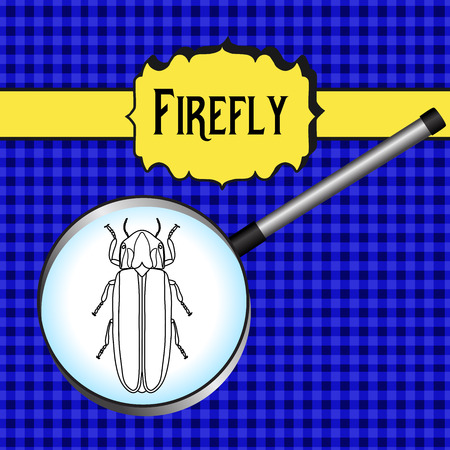firefly: insect in magnifier. Firefly beetle Lampyridae. Sketch of Firefly beetle.  Firefly beetle Design for coloring book.  hand-drawn Firefly beetle. Vector illustration Illustration
